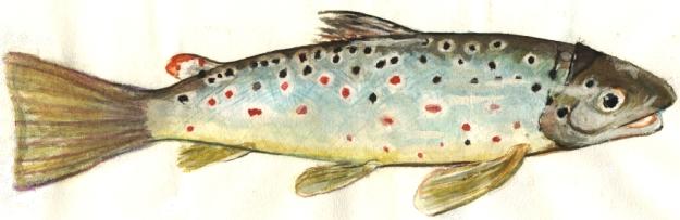 carpe e salmoni al tempo dei chiwawa